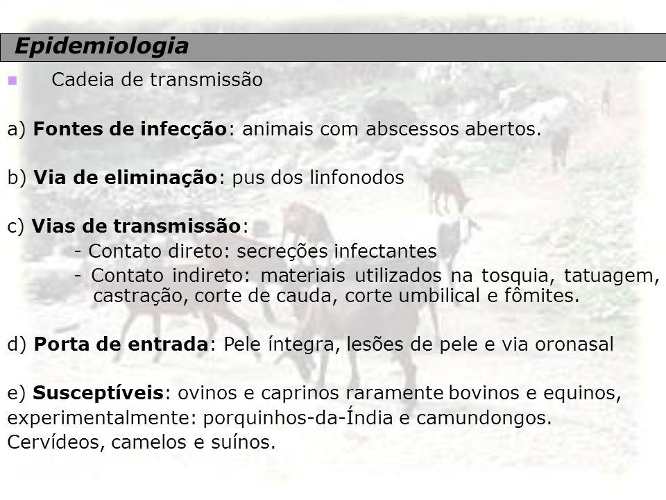 Epidemiologia Cadeia de transmissão