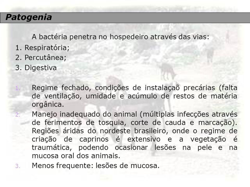 A bactéria penetra no hospedeiro através das vias: