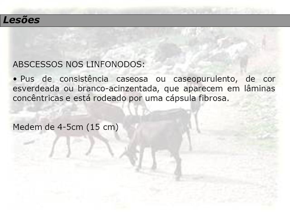 Lesões ABSCESSOS NOS LINFONODOS: