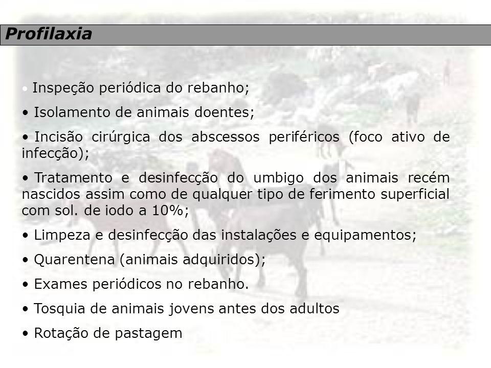 Profilaxia Isolamento de animais doentes;