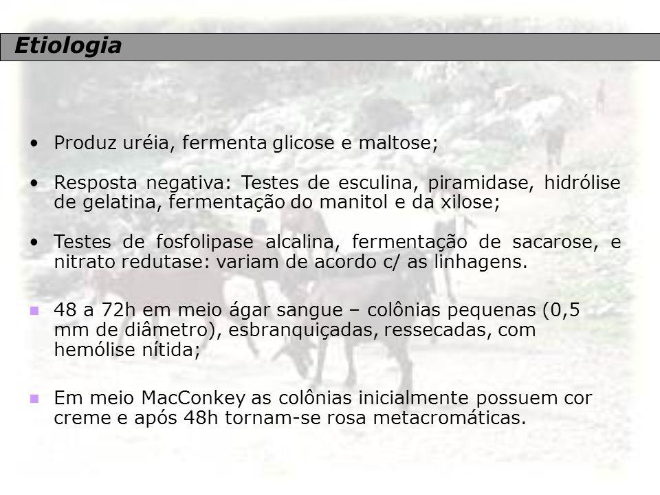 Etiologia Produz uréia, fermenta glicose e maltose;