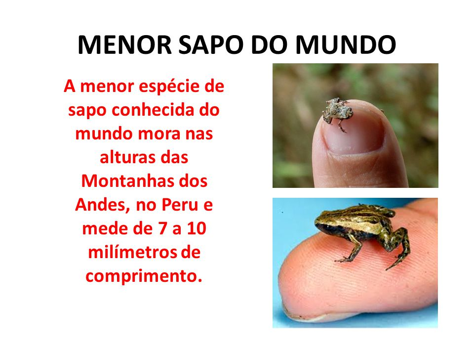 MENOR SAPO DO MUNDO