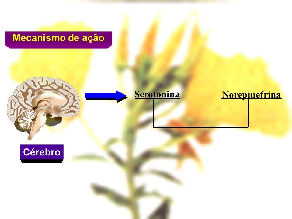 Mecanismo de ação Cérebro Serotonina Norepinefrina