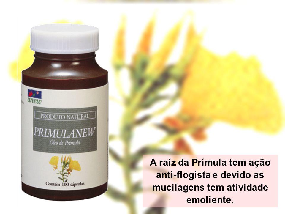 A raiz da Prímula tem ação anti-flogista e devido as mucilagens tem atividade emoliente.