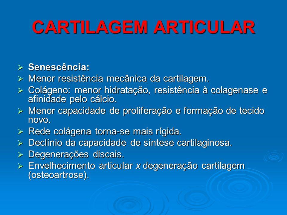 CARTILAGEM ARTICULAR Senescência:
