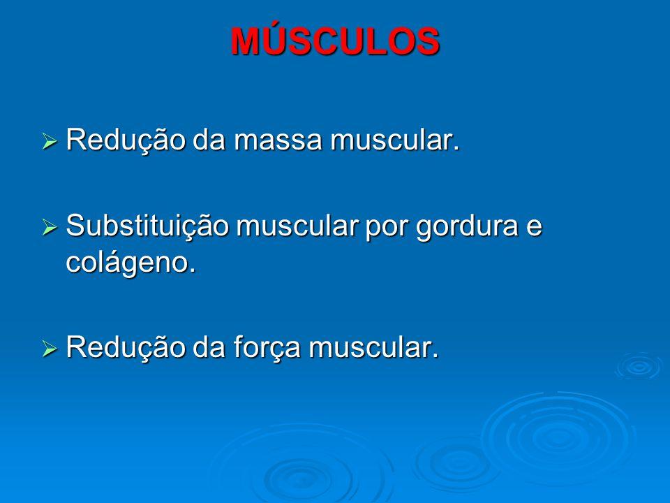MÚSCULOS Redução da massa muscular.