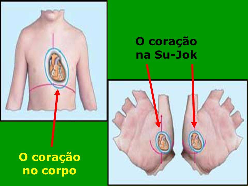 O coração na Su-Jok O coração no corpo