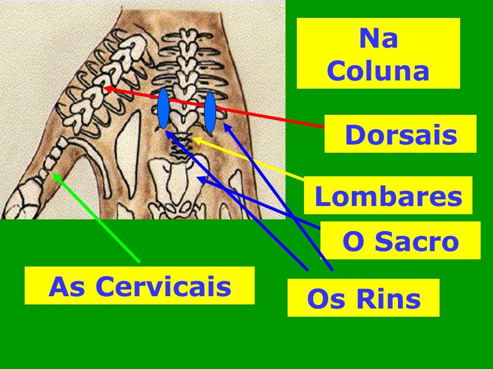 Na Coluna Dorsais Lombares O Sacro As Cervicais Os Rins
