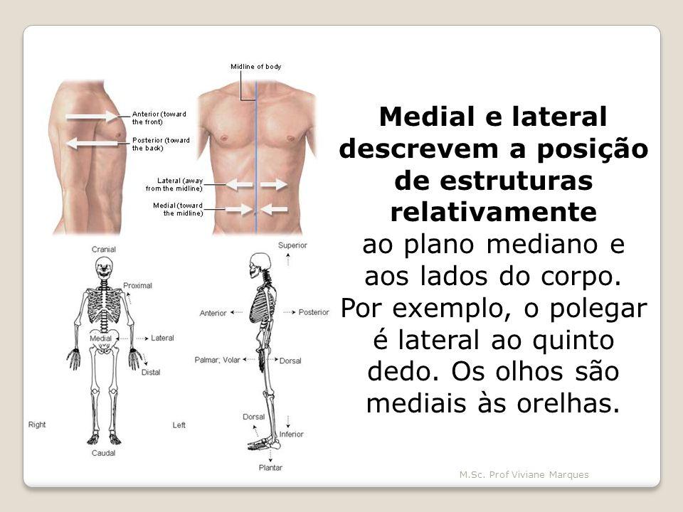 Medial e lateral descrevem a posição de estruturas relativamente