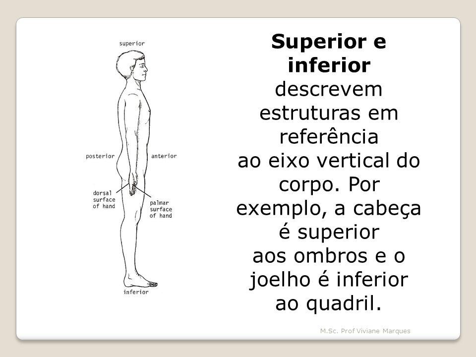 Superior e inferior descrevem estruturas em referência