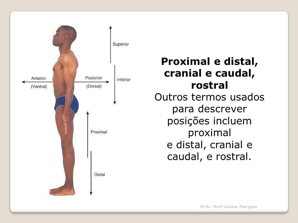 Proximal e distal, cranial e caudal,
