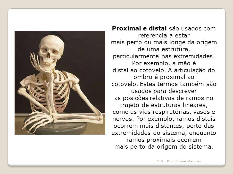 Proximal e distal são usados com referência a estar