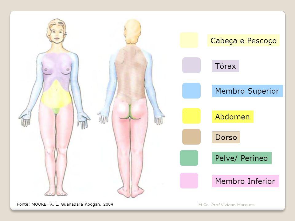 Cabeça e Pescoço Tórax Membro Superior Abdomen Dorso Pelve/ Períneo