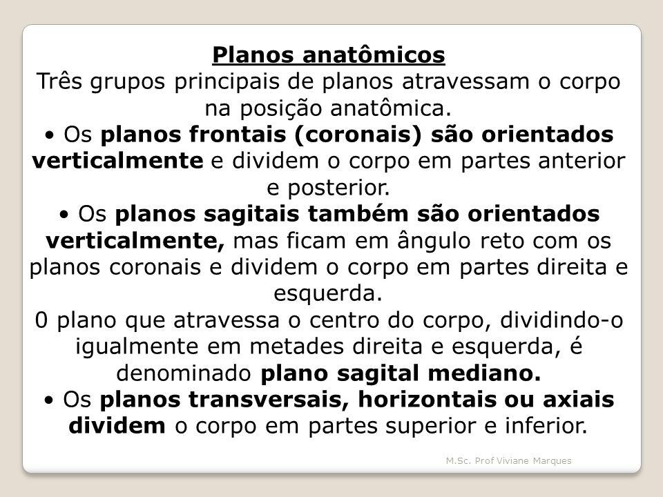Planos anatômicos Três grupos principais de planos atravessam o corpo na posição anatômica.