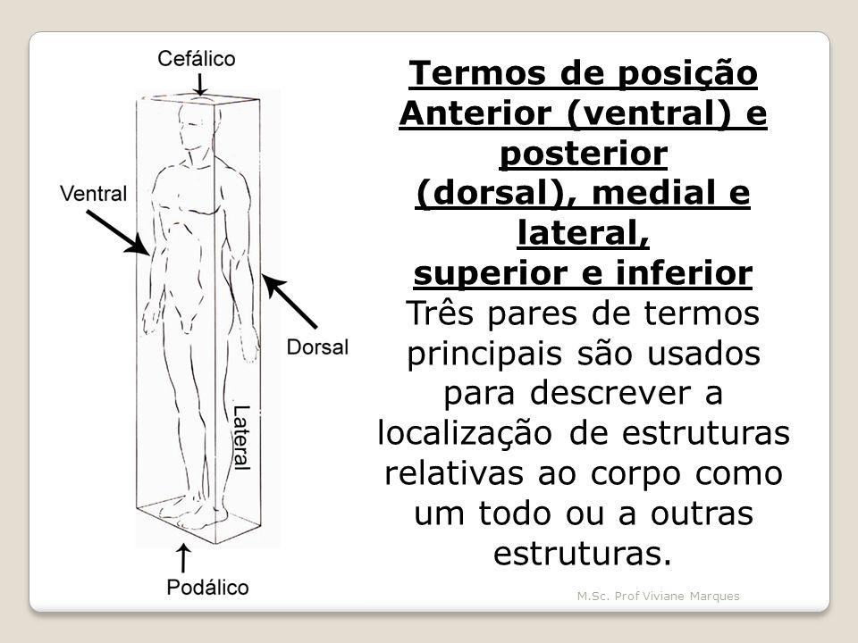 Anterior (ventral) e posterior (dorsal), medial e lateral,