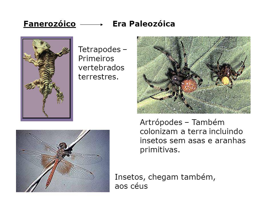 Fanerozóico Era Paleozóica. Tetrapodes – Primeiros vertebrados terrestres.