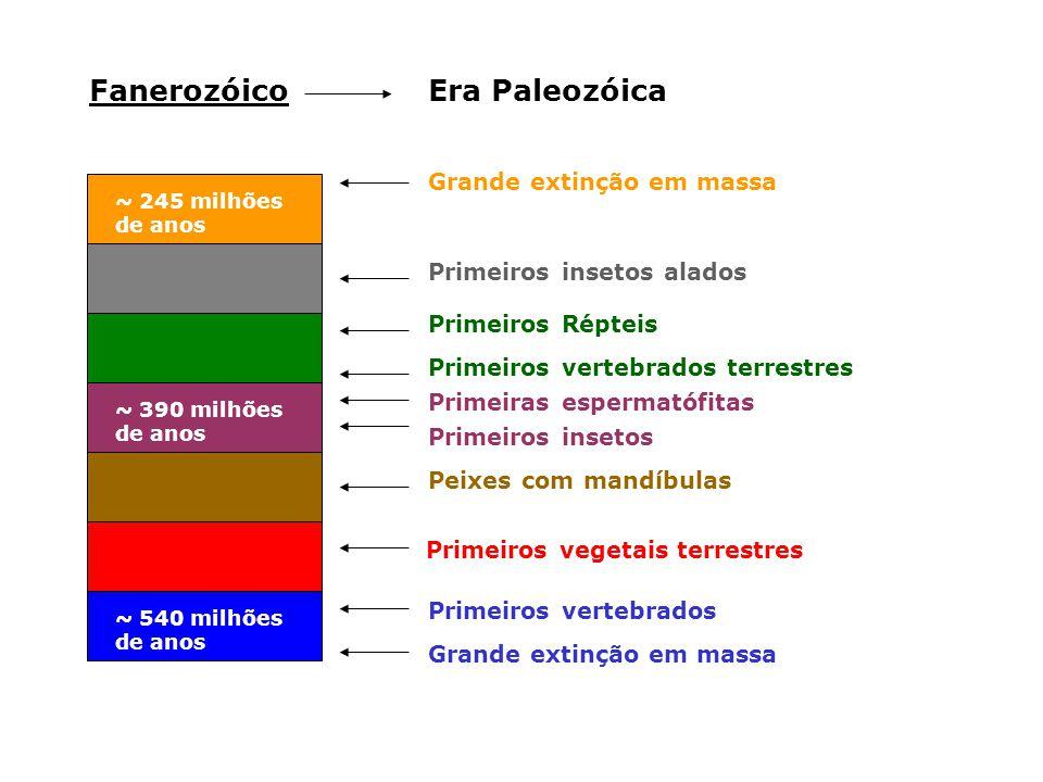 Fanerozóico Era Paleozóica Grande extinção em massa