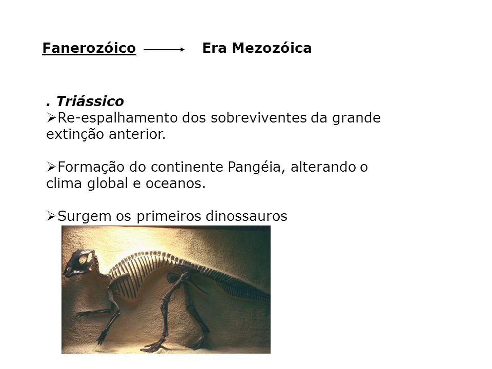 Fanerozóico Era Mezozóica. . Triássico. Re-espalhamento dos sobreviventes da grande extinção anterior.