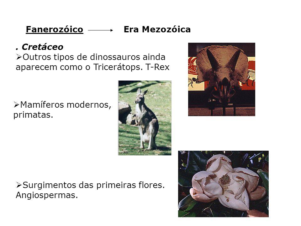 Fanerozóico Era Mezozóica. . Cretáceo. Outros tipos de dinossauros ainda aparecem como o Tricerátops. T-Rex.