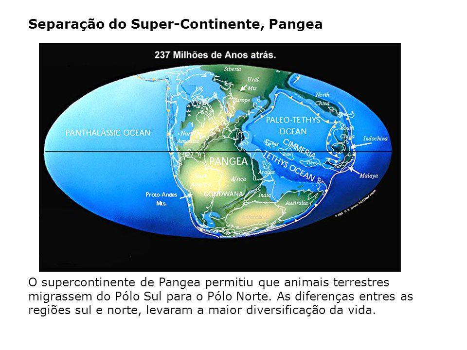 Separação do Super-Continente, Pangea