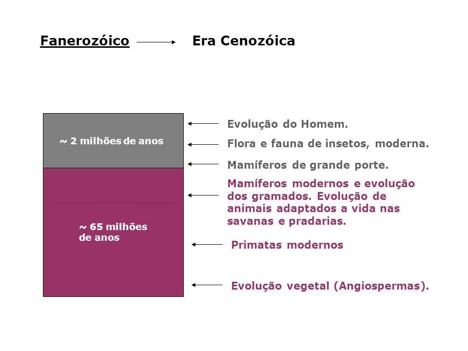Fanerozóico Era Cenozóica Evolução do Homem.