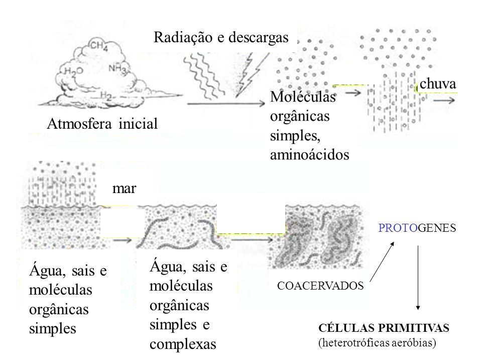 Água, sais e moléculas orgânicas simples e complexas