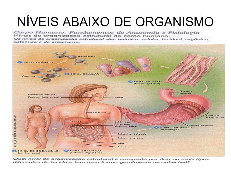 NÍVEIS ABAIXO DE ORGANISMO