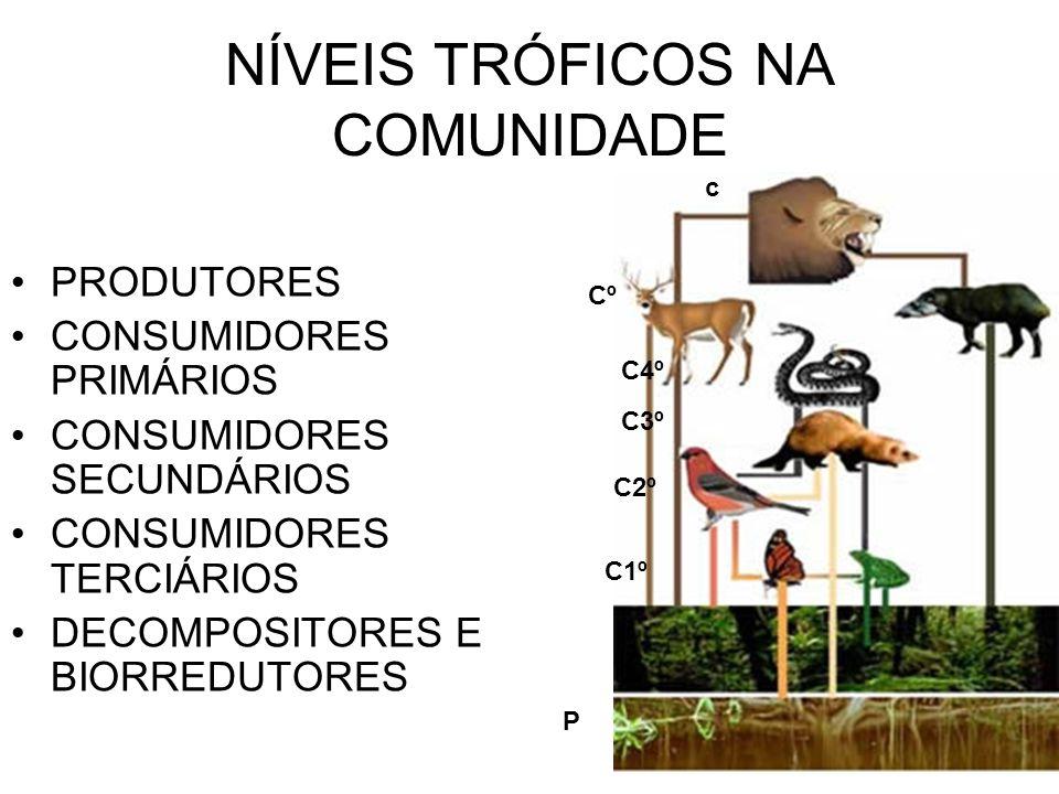 NÍVEIS TRÓFICOS NA COMUNIDADE