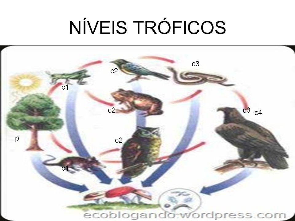NÍVEIS TRÓFICOS c3 c2 c1 c2 c3 c4 p c2 c1