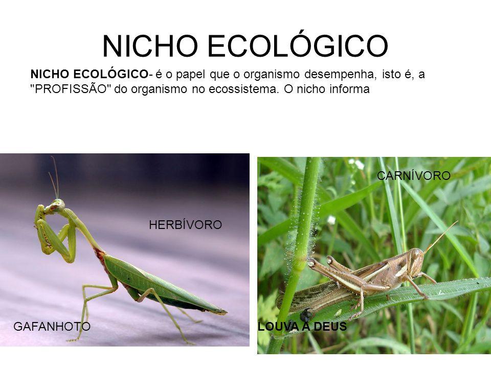 NICHO ECOLÓGICO NICHO ECOLÓGICO- é o papel que o organismo desempenha, isto é, a PROFISSÃO do organismo no ecossistema. O nicho informa.