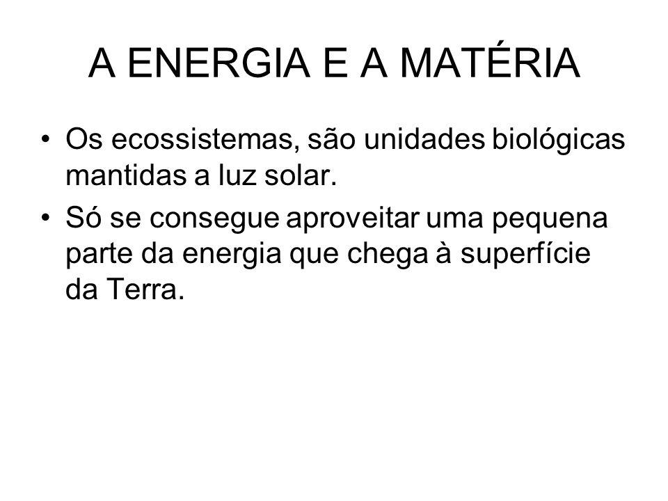 A ENERGIA E A MATÉRIA Os ecossistemas, são unidades biológicas mantidas a luz solar.