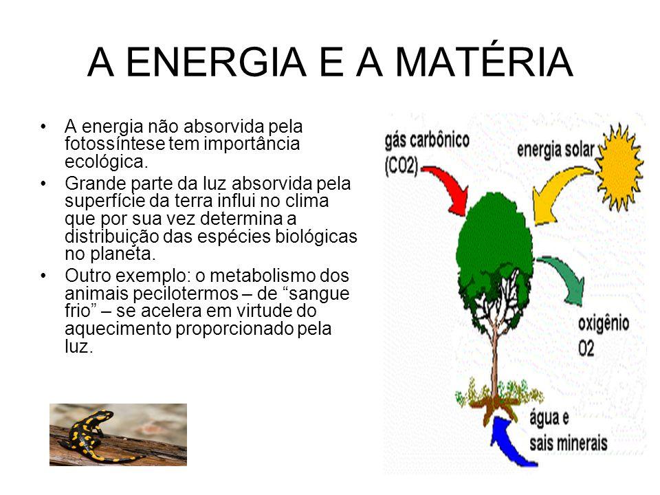 A ENERGIA E A MATÉRIA A energia não absorvida pela fotossíntese tem importância ecológica.