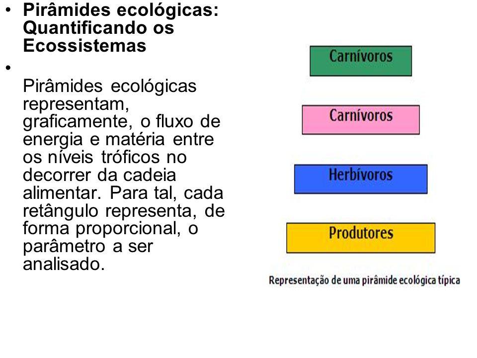 Pirâmides ecológicas: Quantificando os Ecossistemas