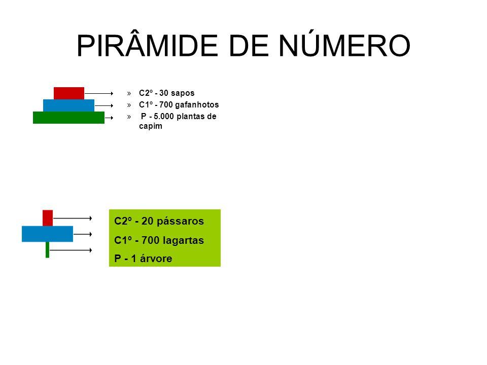PIRÂMIDE DE NÚMERO C2º - 20 pássaros C1º - 700 lagartas P - 1 árvore
