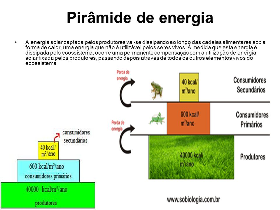 Pirâmide de energia