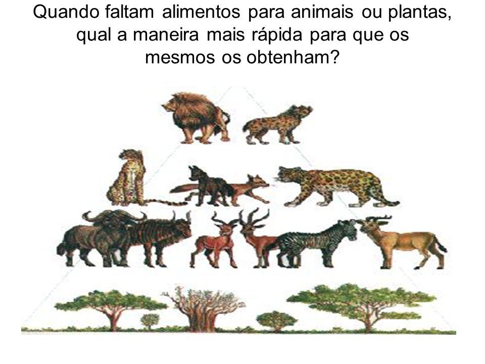 Quando faltam alimentos para animais ou plantas, qual a maneira mais rápida para que os mesmos os obtenham