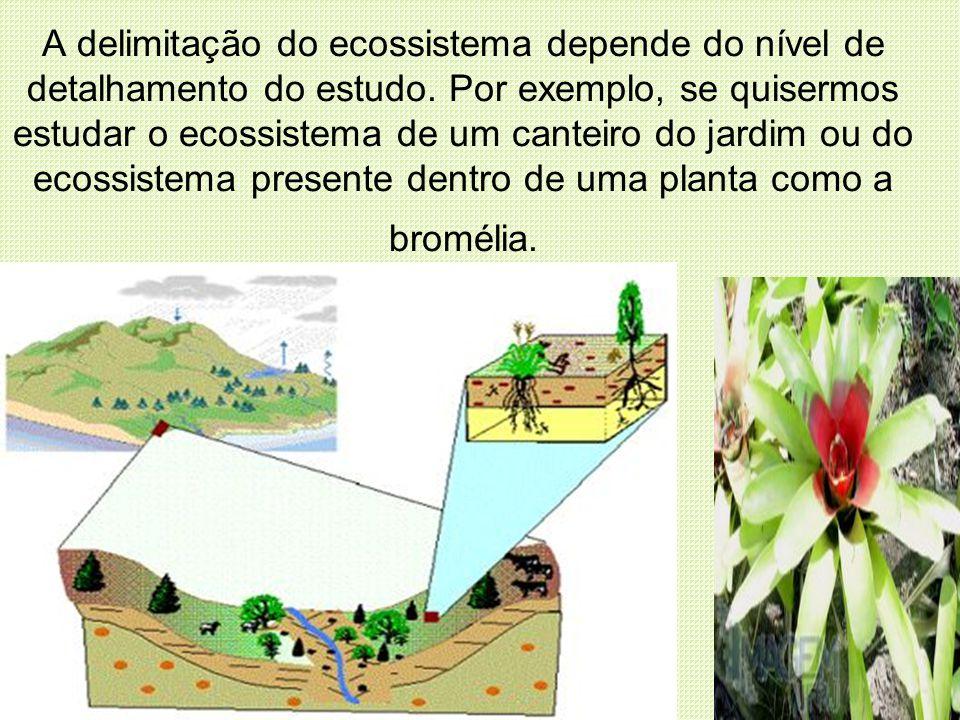 A delimitação do ecossistema depende do nível de detalhamento do estudo.