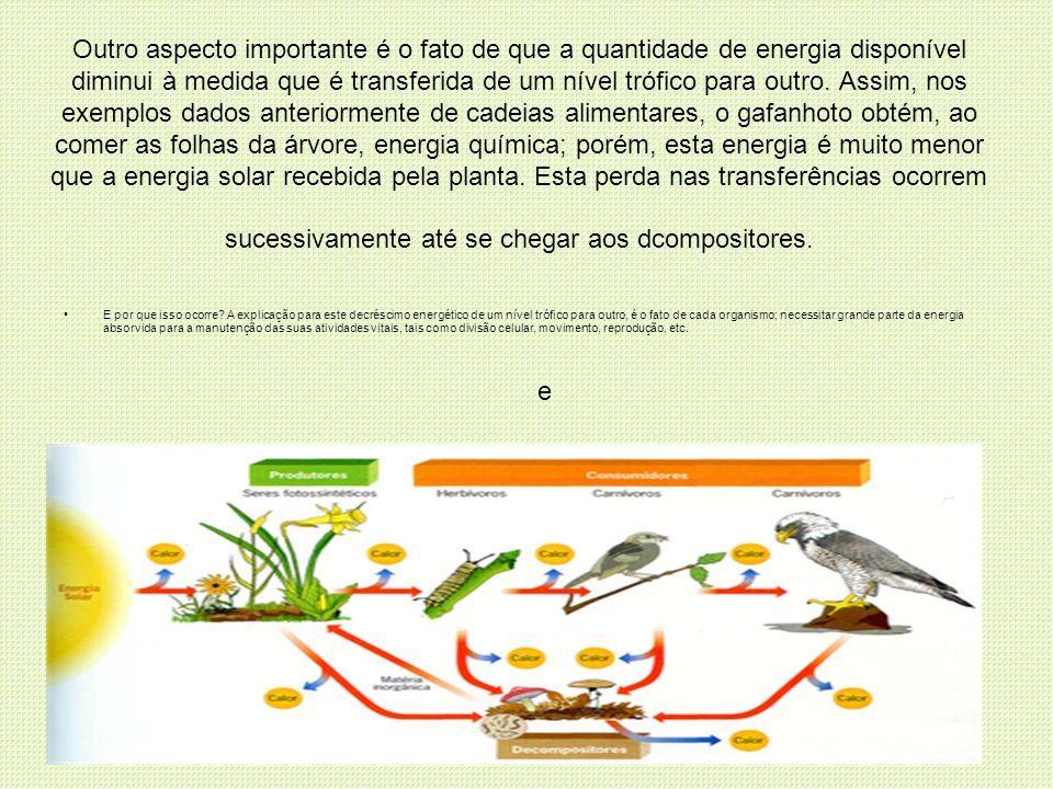 Outro aspecto importante é o fato de que a quantidade de energia disponível diminui à medida que é transferida de um nível trófico para outro. Assim, nos exemplos dados anteriormente de cadeias alimentares, o gafanhoto obtém, ao comer as folhas da árvore, energia química; porém, esta energia é muito menor que a energia solar recebida pela planta. Esta perda nas transferências ocorrem sucessivamente até se chegar aos dcompositores.