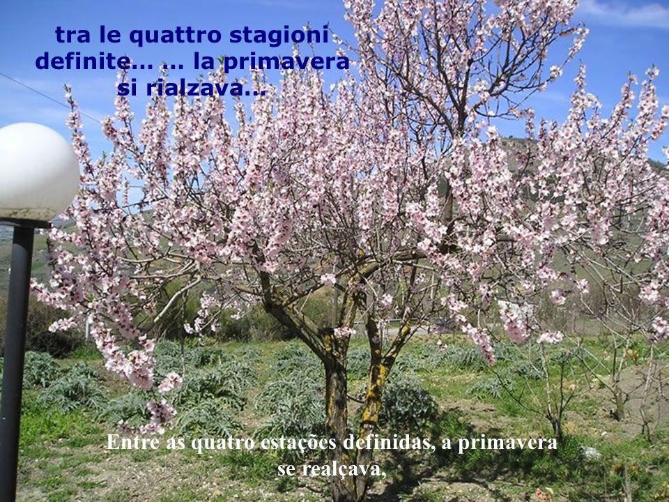 tra le quattro stagioni definite… … la primavera si rialzava…
