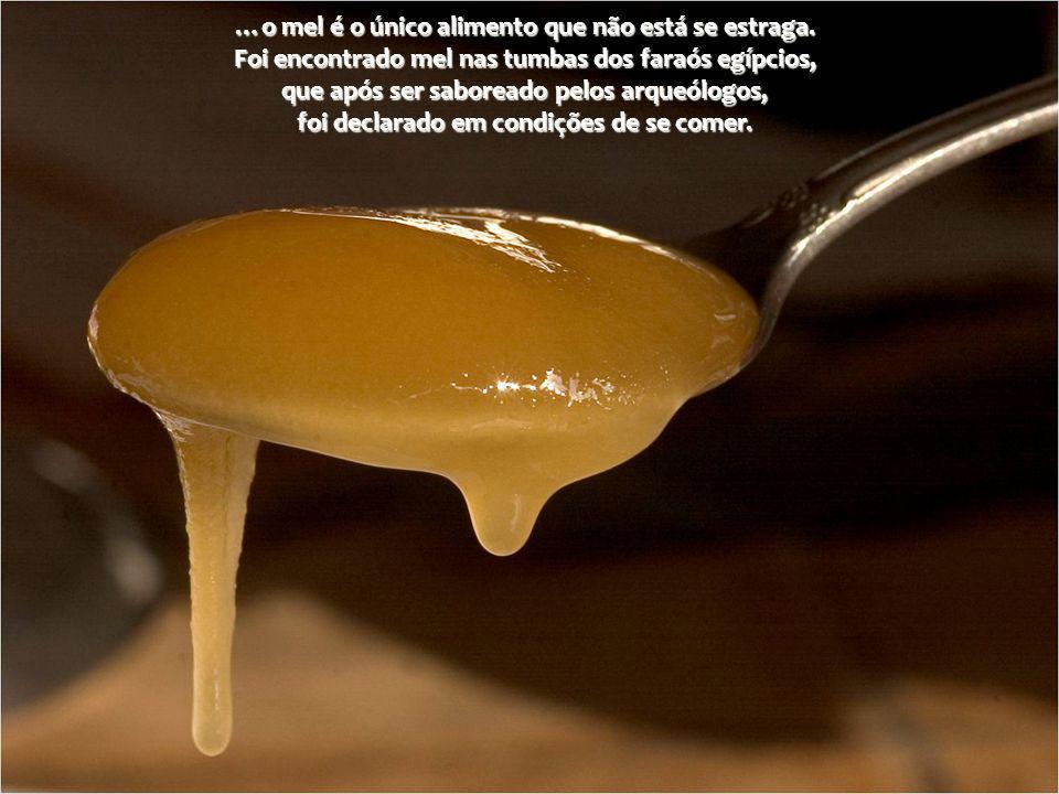 …o mel é o único alimento que não está se estraga.