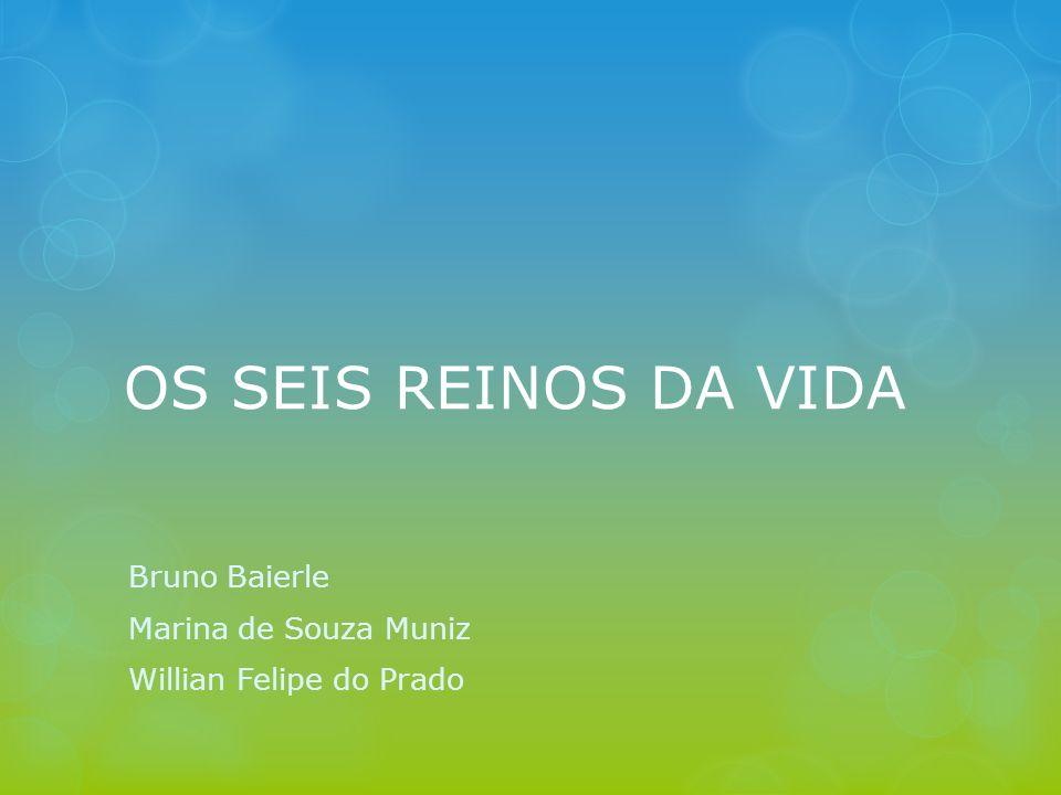 Bruno Baierle Marina de Souza Muniz Willian Felipe do Prado