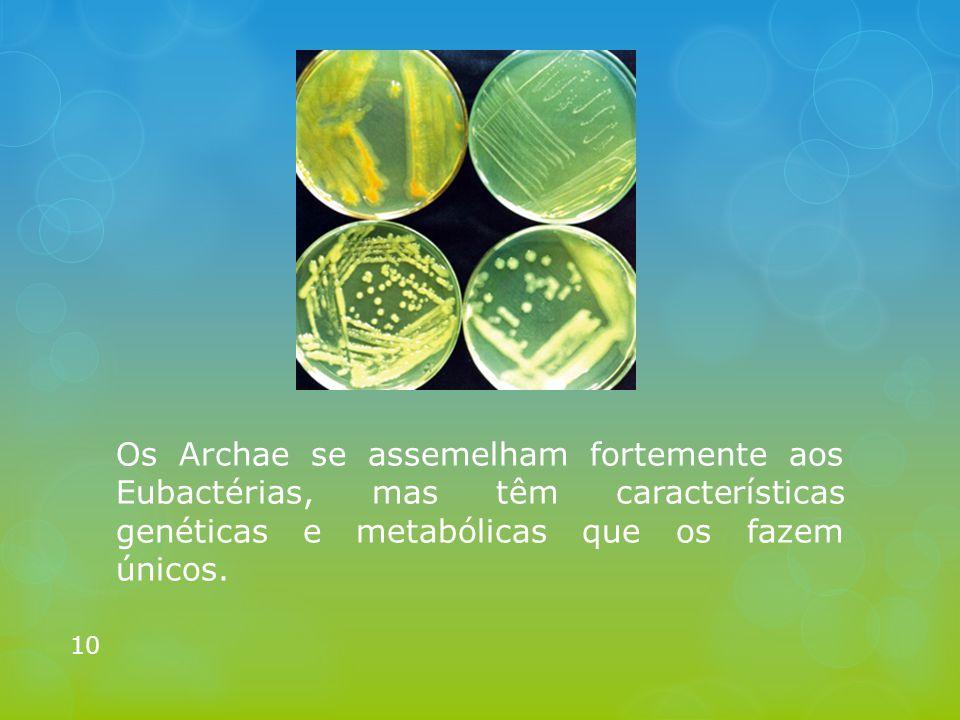 Os Archae se assemelham fortemente aos Eubactérias, mas têm características genéticas e metabólicas que os fazem únicos.