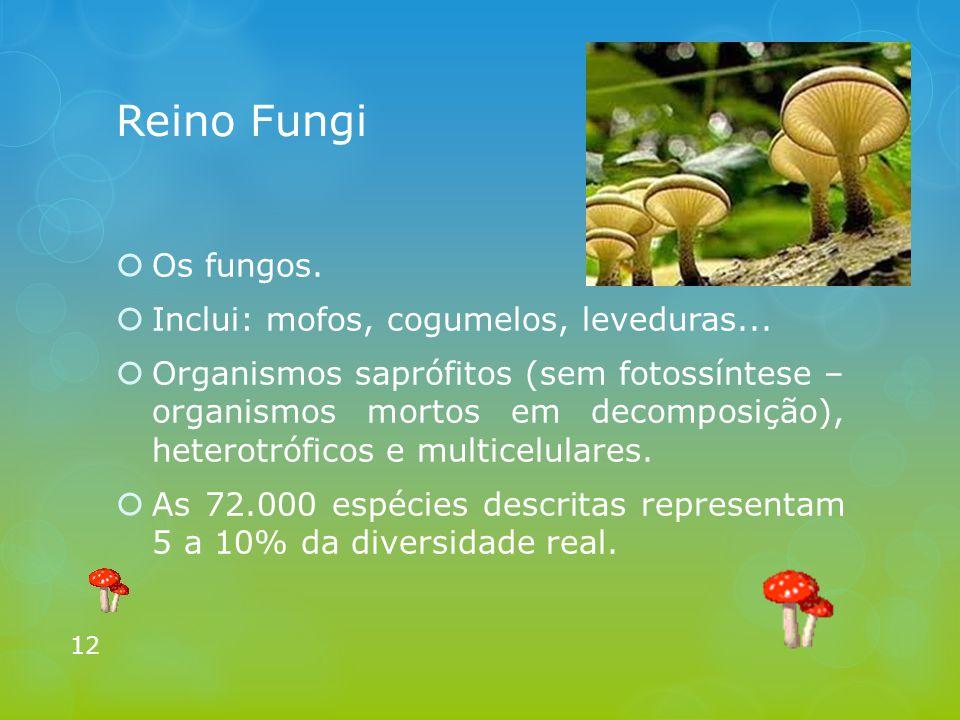 Reino Fungi Os fungos. Inclui: mofos, cogumelos, leveduras...