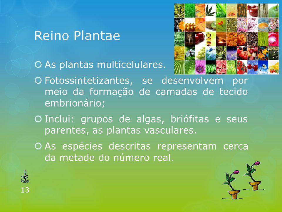 Reino Plantae As plantas multicelulares.