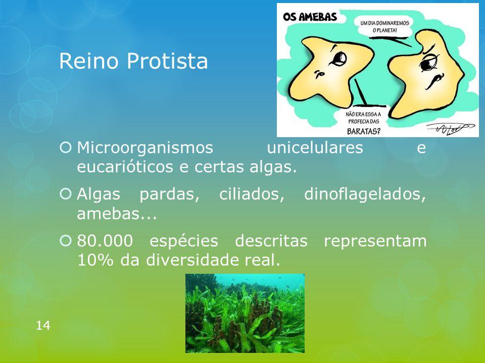 Reino Protista Microorganismos unicelulares e eucarióticos e certas algas. Algas pardas, ciliados, dinoflagelados, amebas...