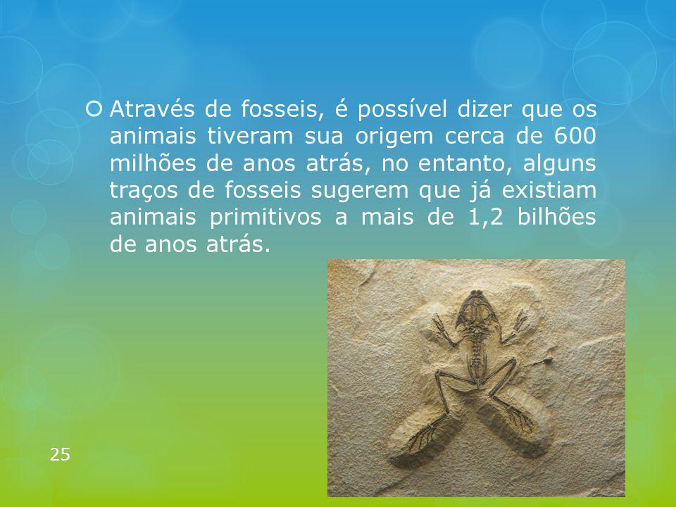 Através de fosseis, é possível dizer que os animais tiveram sua origem cerca de 600 milhões de anos atrás, no entanto, alguns traços de fosseis sugerem que já existiam animais primitivos a mais de 1,2 bilhões de anos atrás.
