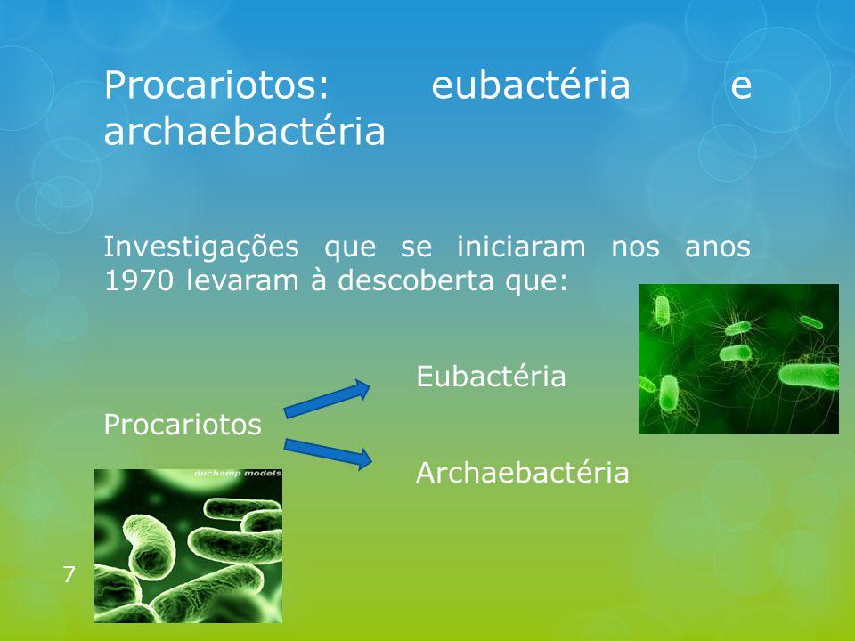 Procariotos: eubactéria e archaebactéria