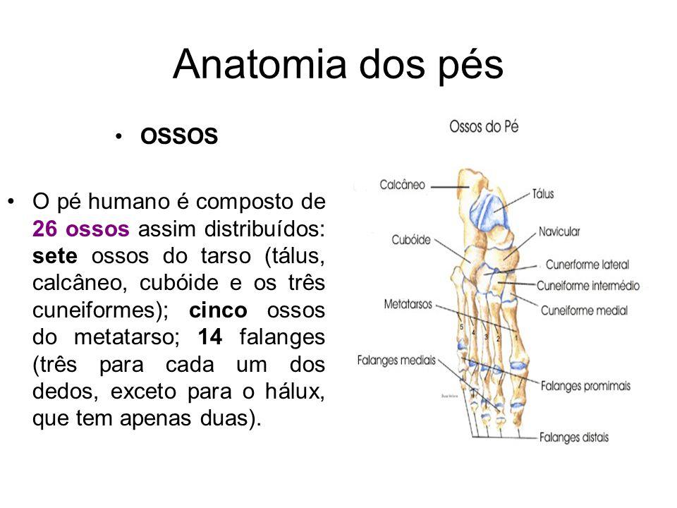 Anatomia dos pés OSSOS.