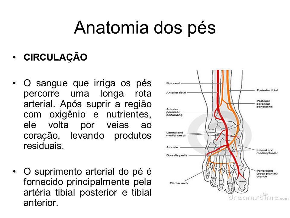 Anatomia dos pés CIRCULAÇÃO