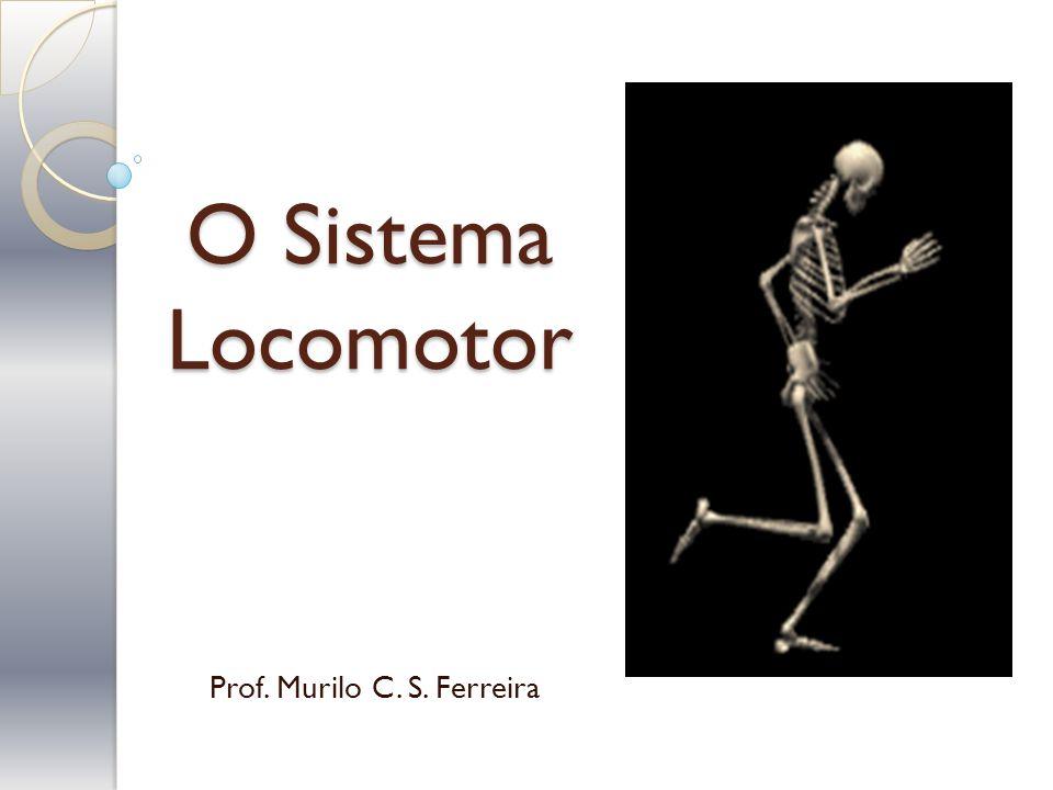 Prof. Murilo C. S. Ferreira